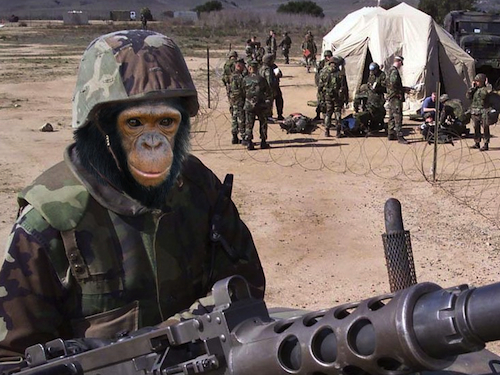 Of Chimps and Men: War In Evolutionary Perspective