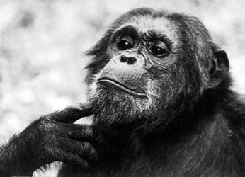 Evolution and Morality I: Simon Blackburn