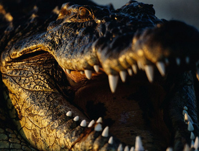 Largest Croc Made a Meal Out of Humans