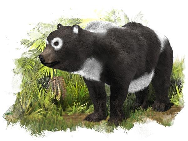 Pandas: Native to…Spain?
