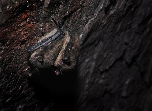 Do Wild Bats Hold the Key to Understanding Human Tribal Behavior?