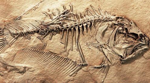 Found: Fossil Flatfish