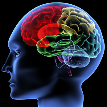 Evidence That Brain Parts Evolve Independently