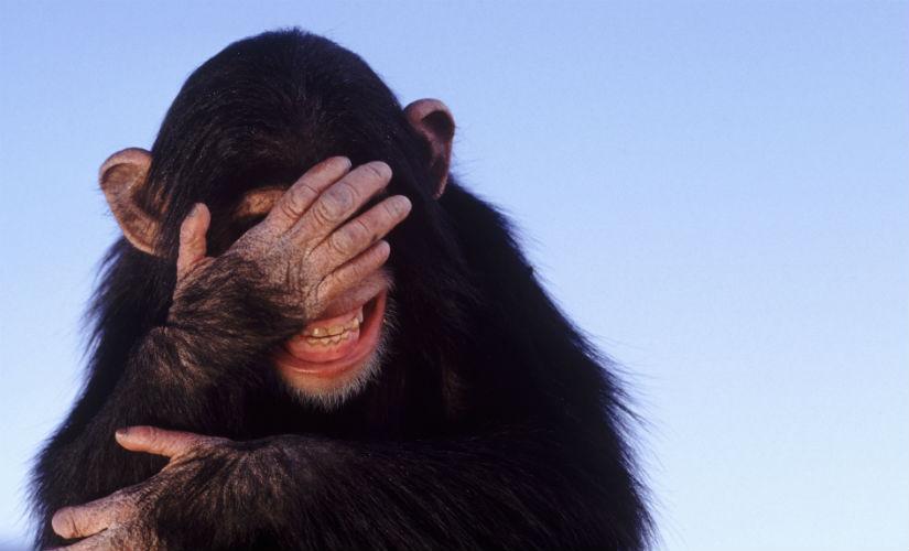 Apes Enjoy Slapstick Humor