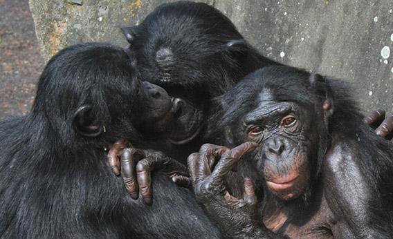 Are Humans Monogamous or Polygamous?