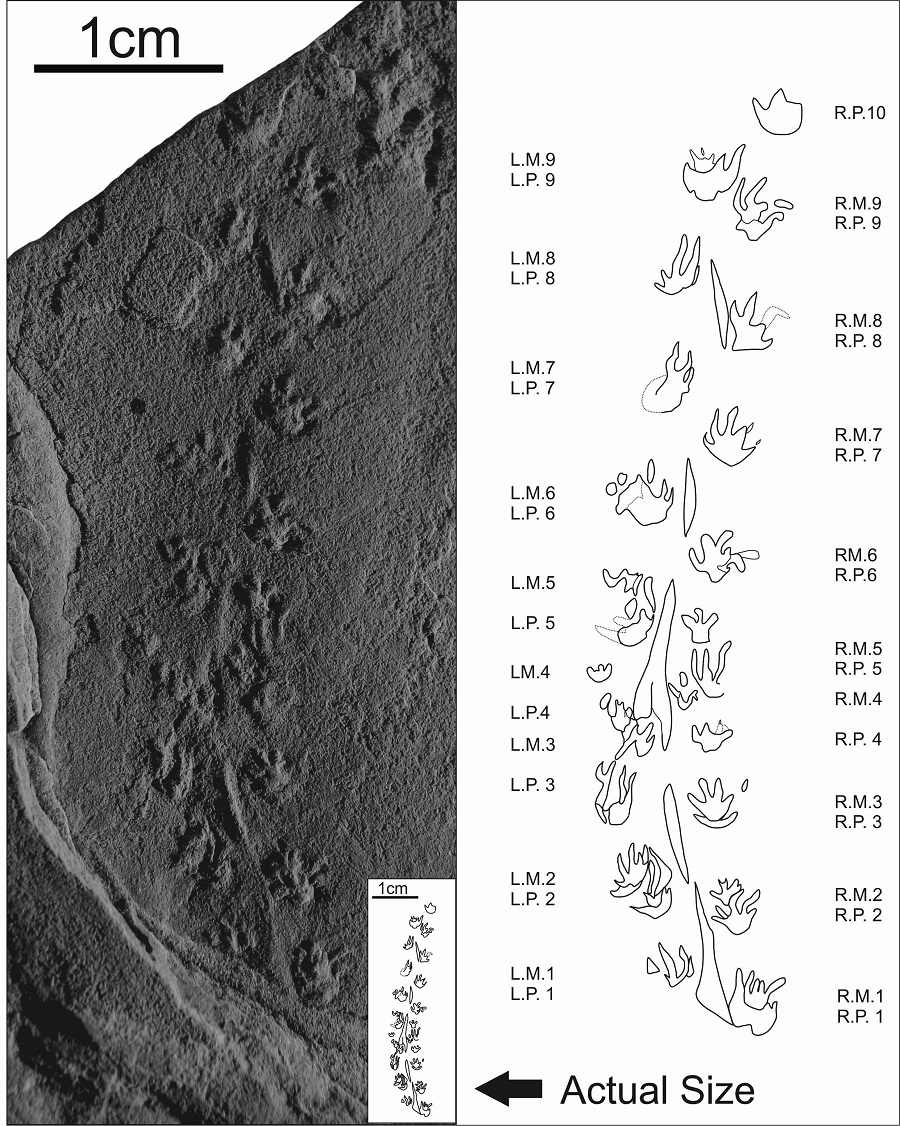 World's Tiniest Footprints Discovered