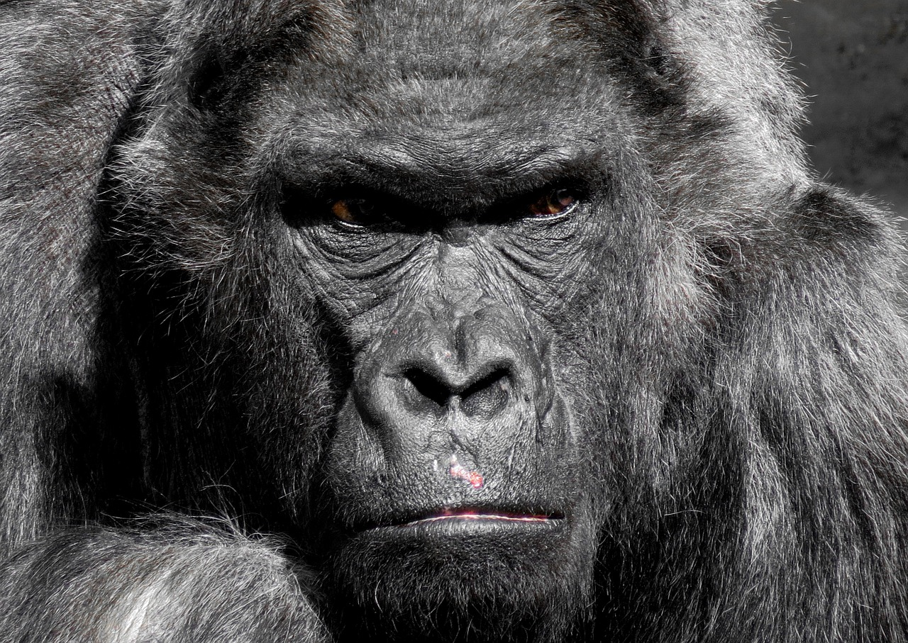 What Our Primate Relatives Say About War