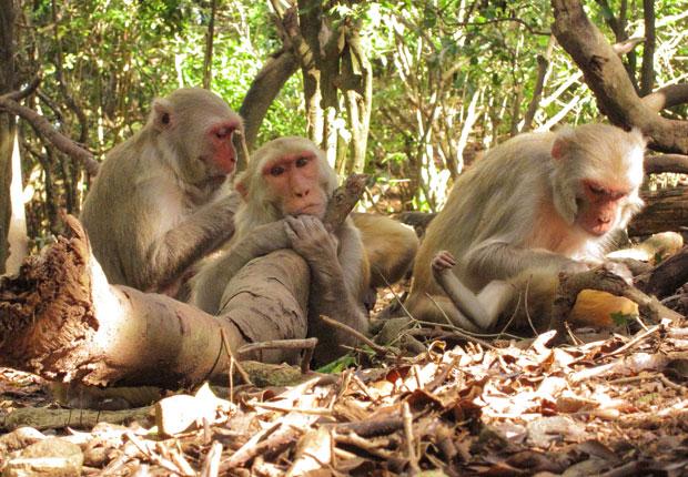 Networking Ability a Family Trait in Monkeys