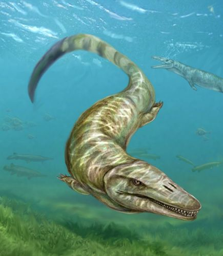 First Freshwater Mosasaur Discovered