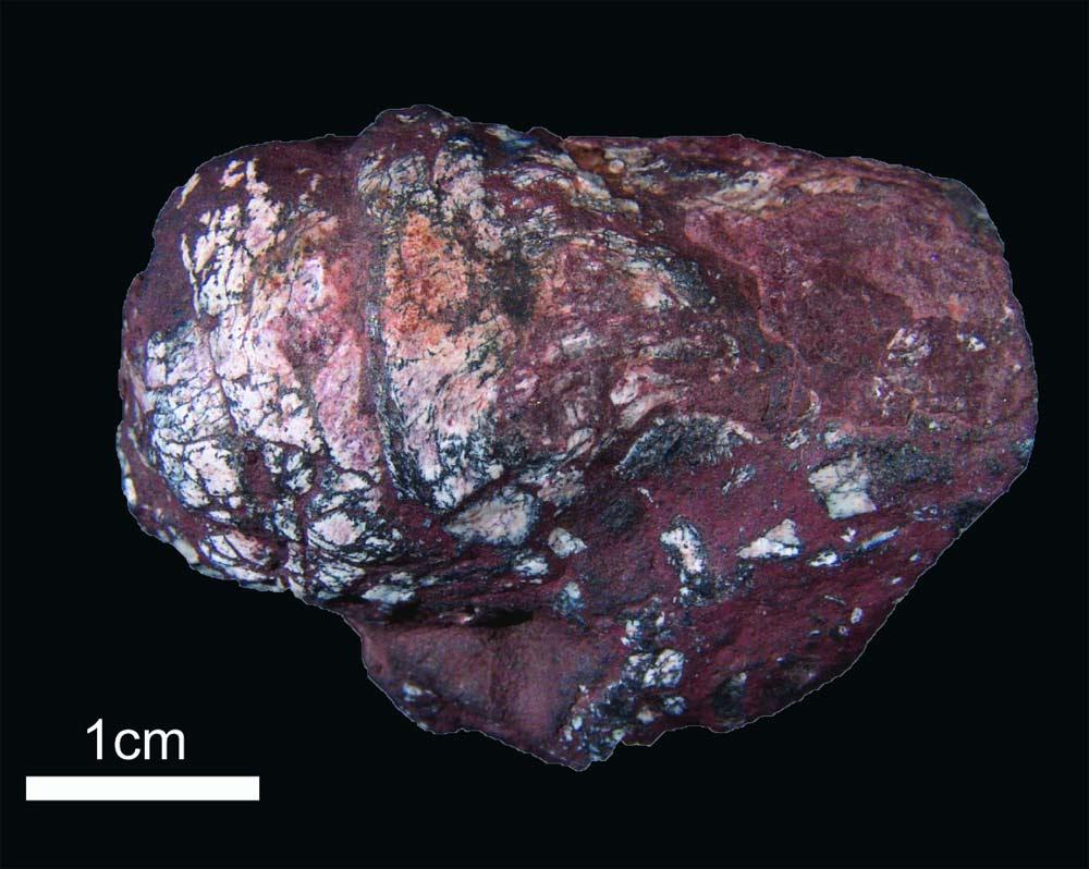 Prehistoric Poop Pleasantly Pleases Paleontologists
