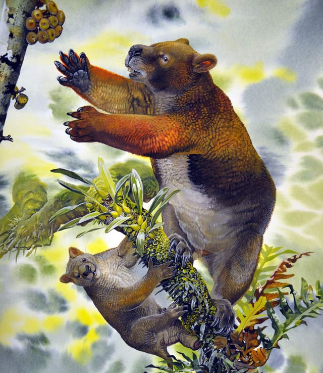 15 Million Years Ago, A Marsupial Resembling a Bear Swung High in Treetops