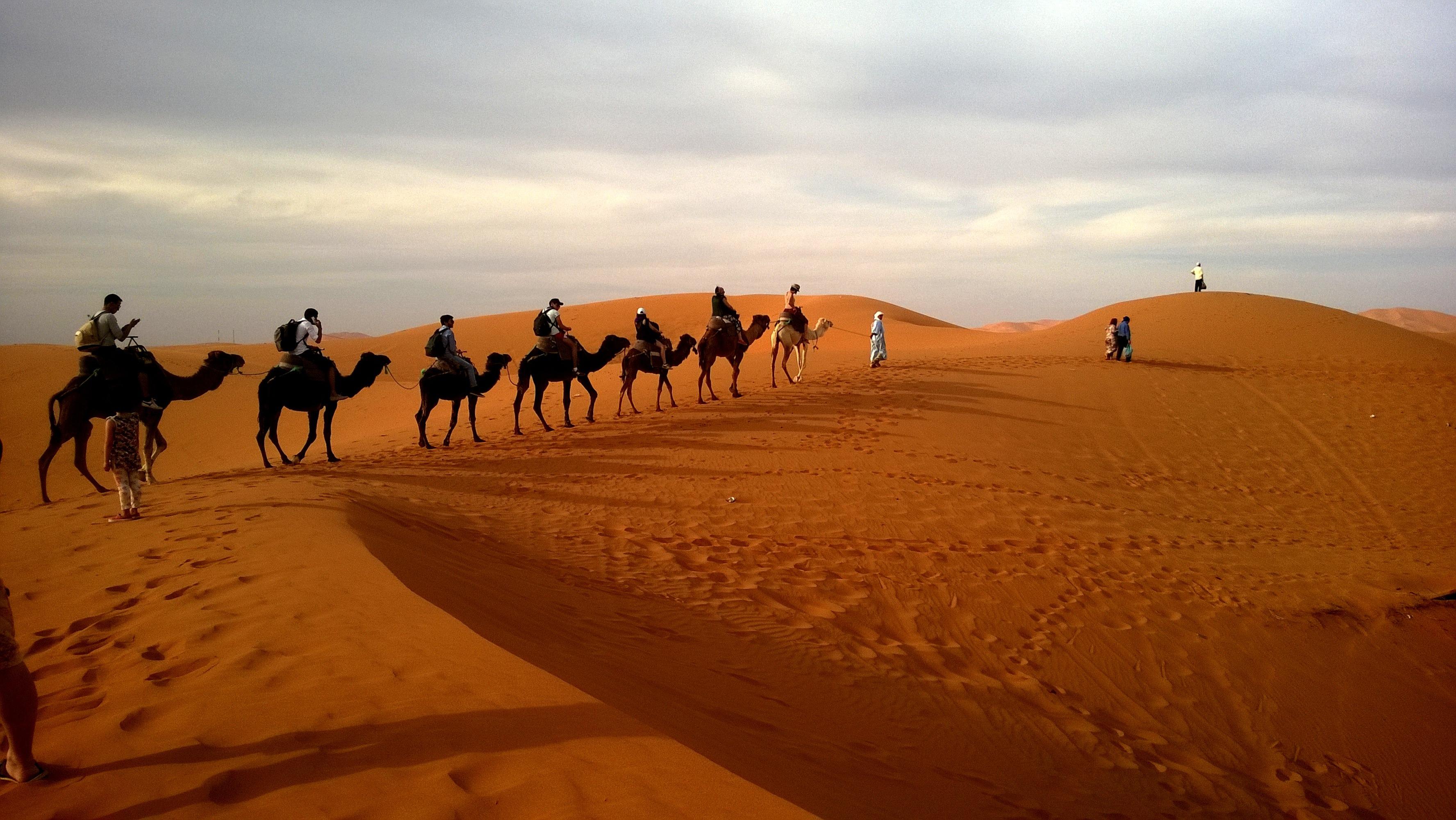 Camels Were Not Originally Desert Animals