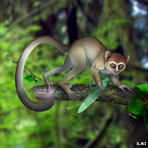 Tiny Ancient Primate was Earliest Tarsier