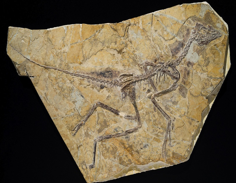 New Prehistoric Bird is Older Than Archaeopteryx
