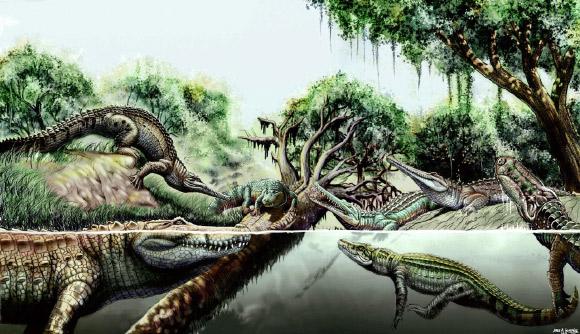 Studies on Crocodile Diversity Discover Two New Species in Venezuela