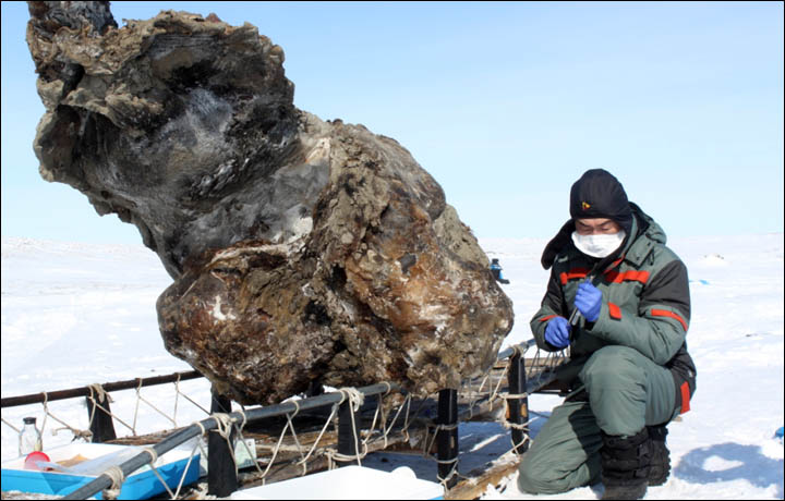 Mammoth Blood Preserved in Ancient Remains Brings Hopes of Cloning