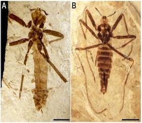 Prehistoric Flea Provides Connection Between Earliest and Modern Species