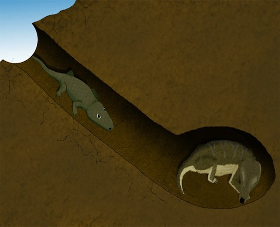 A Cynodont Hosts an Injured Amphibian in its Home 250 Million Years Ago