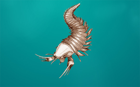 The Scissorhands of the Cambrian
