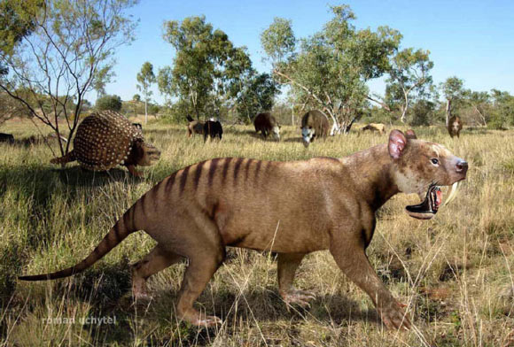 Ancient Marsupial Resembled Saber-Toothed Tiger in Appearance, Not Bite