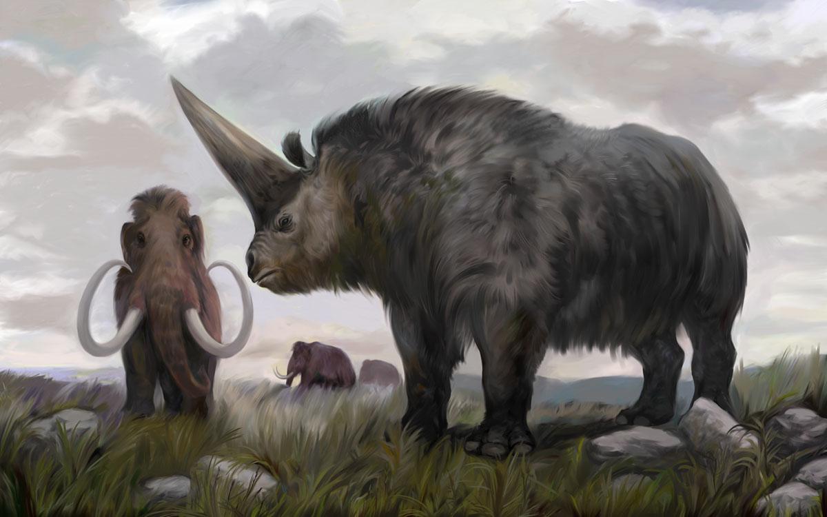 Complete Rhinoceros Skull Found, Helps Fill Gap in Family Tree