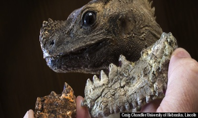 Prehistoric Large Lizard Offers Insight About How Climate Affects Animal Size