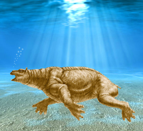 10-Million-Year-Old Desmostylian Roamed Ancient Pacific
