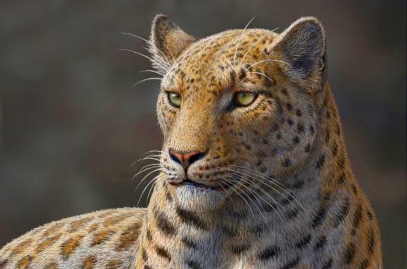 Oldest Big Cat Discovered in Tibetan Himalayas