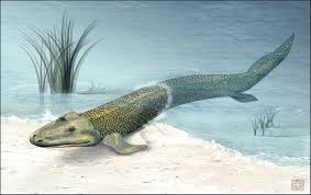 "Fossil ""Fishapod"" Hints at Rear Leg Evolution"