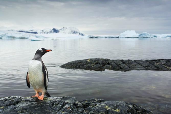 Penguin Evolution Reworked