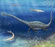 Protorosaur From China Sported Long Snout and Neck