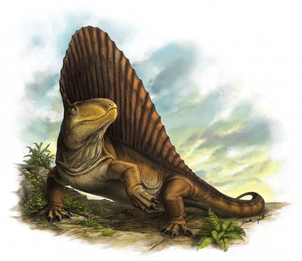 Scientists Reveal Secrets of Dimetrodon Dentition