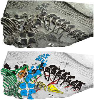 Earliest Marine Reptile Embryos Tell a New Story of Land Birth