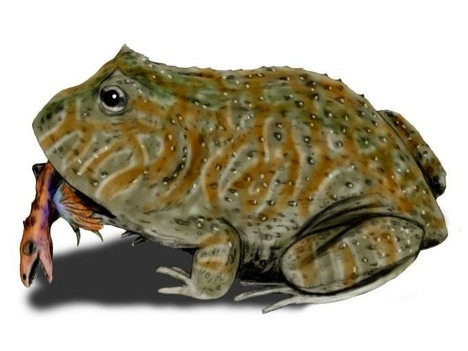 Ancient Carnivorous Frog Sported Thorns