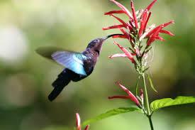 Hummingbird History Debunked