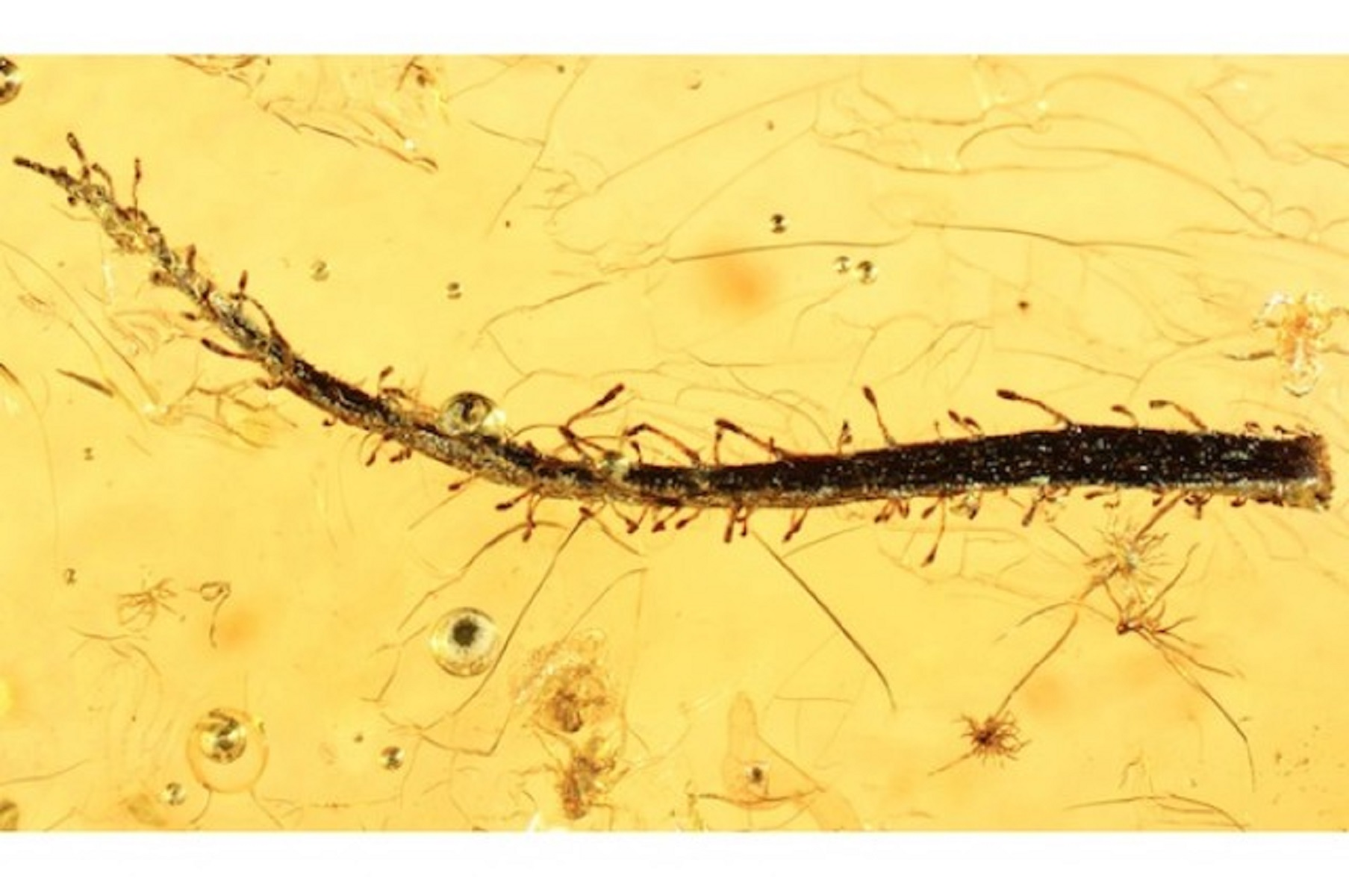 First Fossil Found of a Carnivorous Plant Leaf