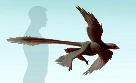 New Fossil Providing Insight into History of Flight