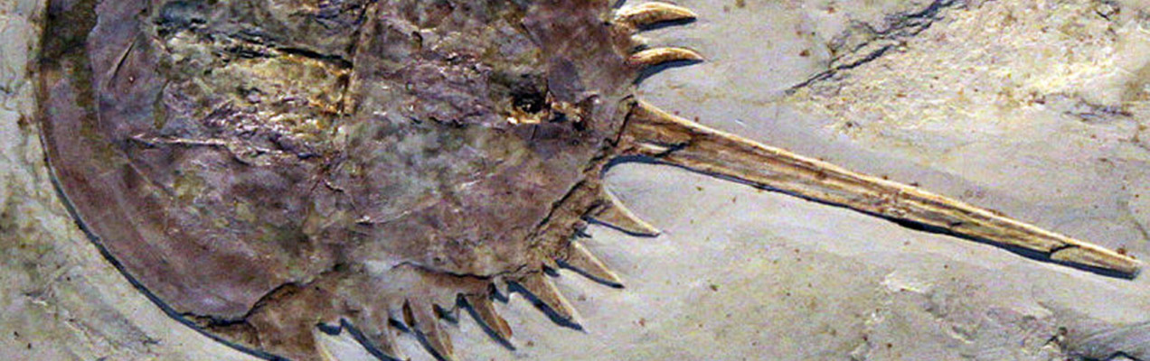 Little-known Limitations of the Living Fossil Concept