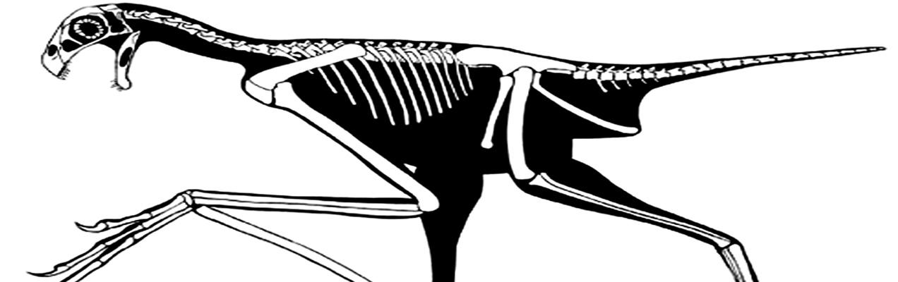 Feathered Bat-Like Dinosaur Discovered with Strange Finger Bone