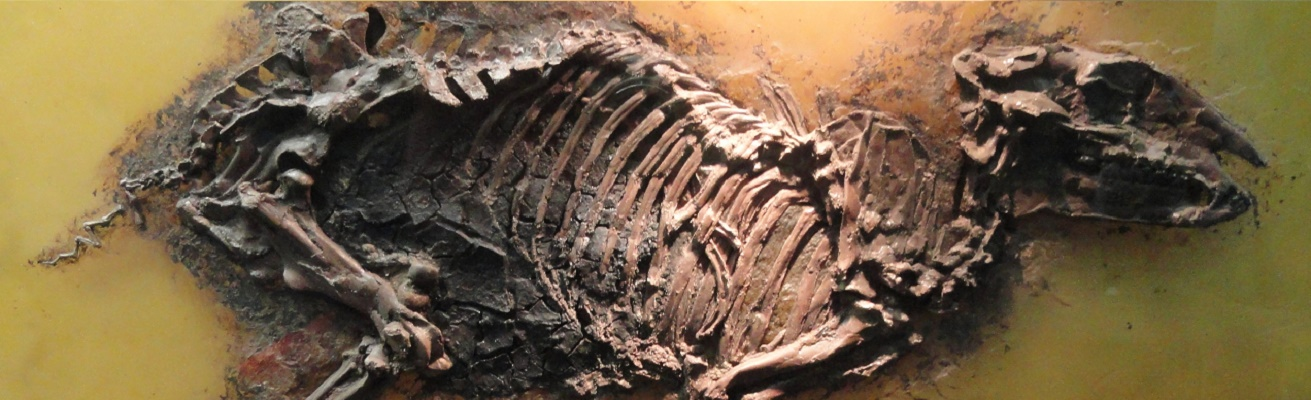 Pregnant Horse Uncovered in German Fossil Pit