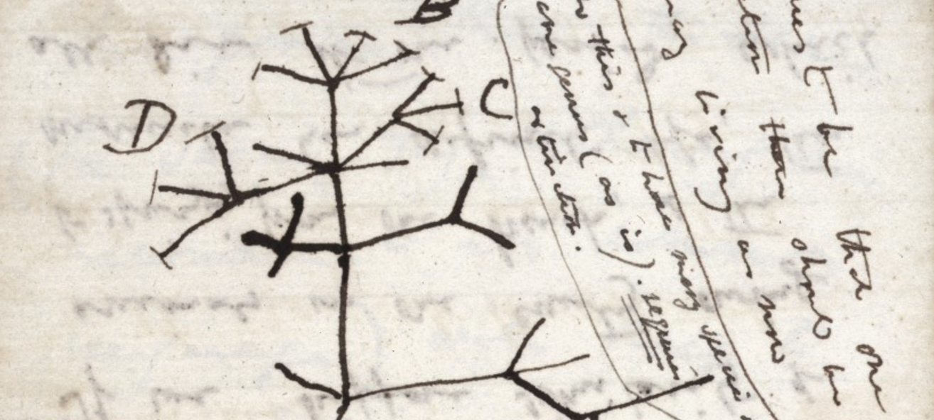 Why Darwin's Tree of Life is a Cognitively Compelling Icon of Evolution
