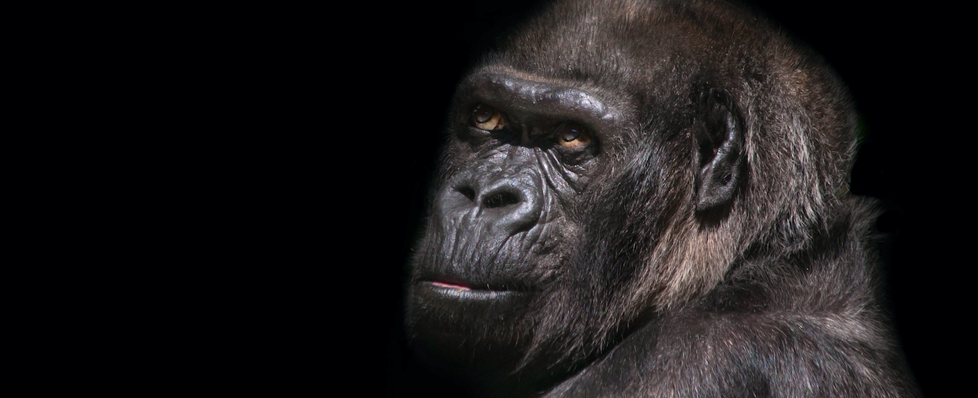 The five most common misunderstandings about evolution