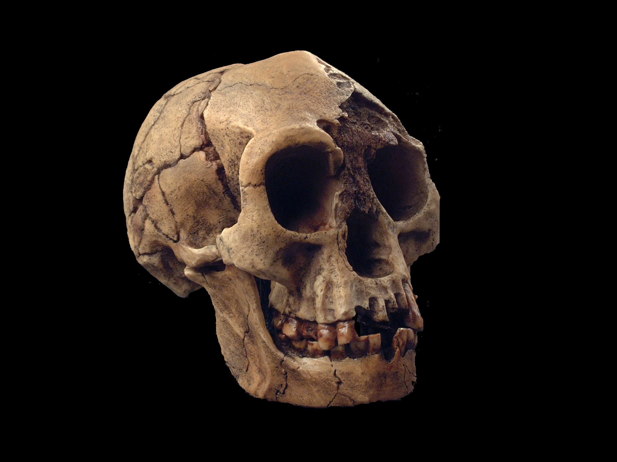No, We Don't Actually Know That Modern Humans Killed Off The Hobbits