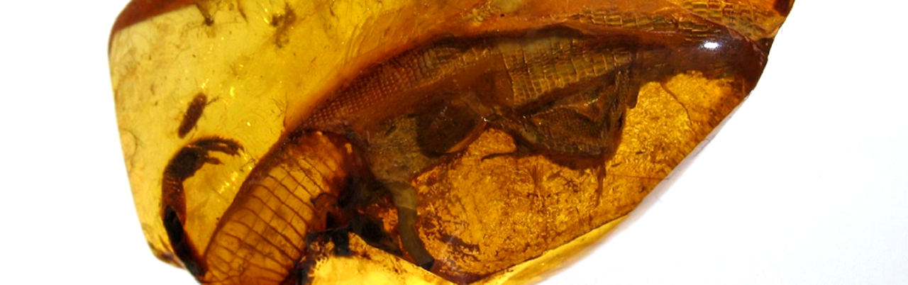 What Reptiles Trapped in Tree Resin Can Tell Us About Evolution