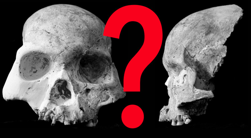 Another Mysterious Hominin Ancestor? Not So Fast