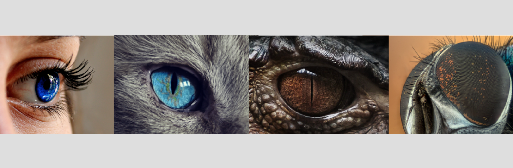 Eye Origins: How Evolution Could Produce a Sophisticated Eye