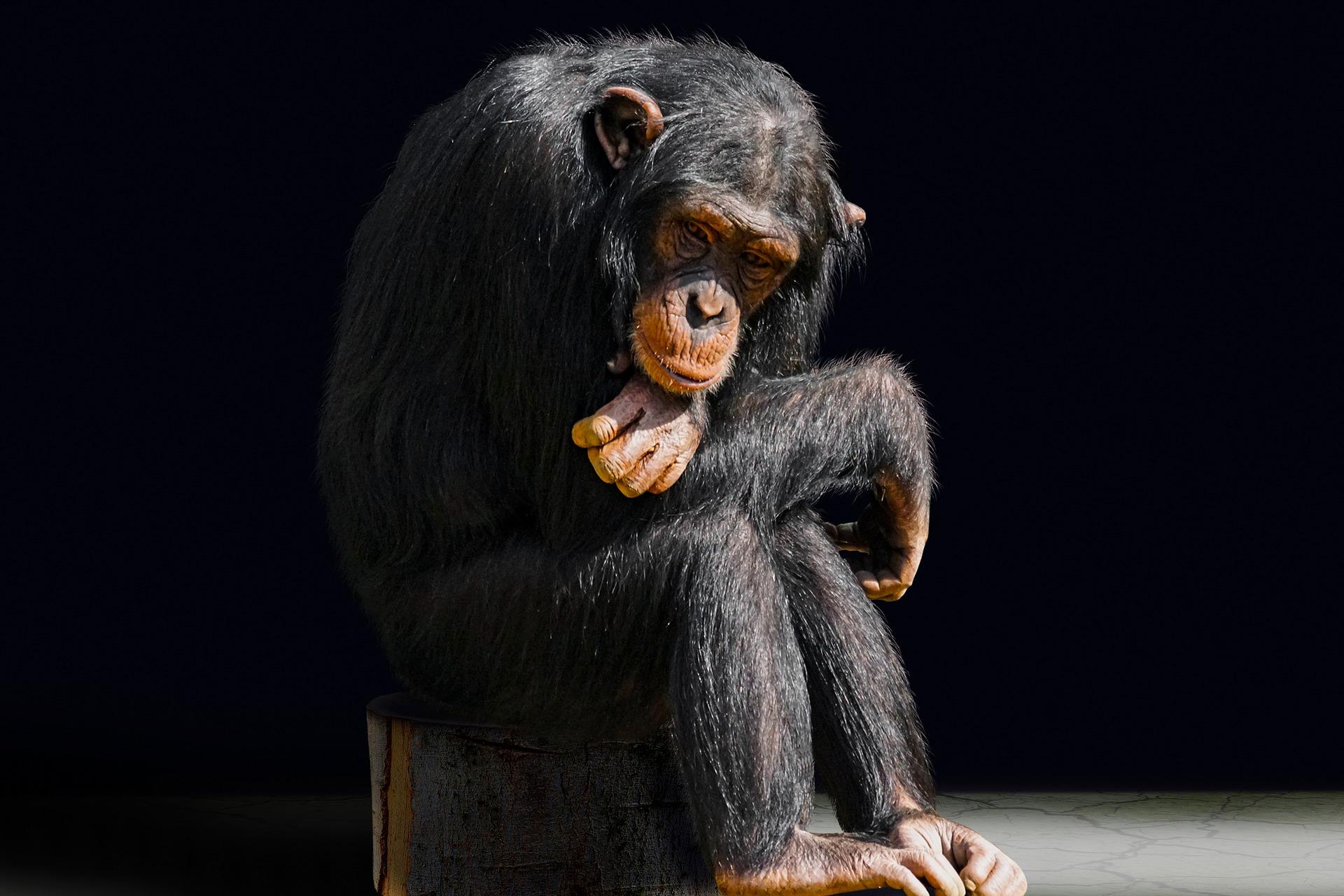 The Origins and Evolutionary Effects of Consciousness