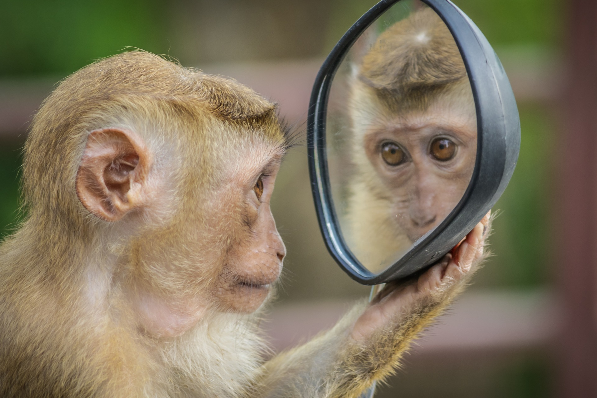 Can Evolution Be Conscious of Itself? Yes, It Can!