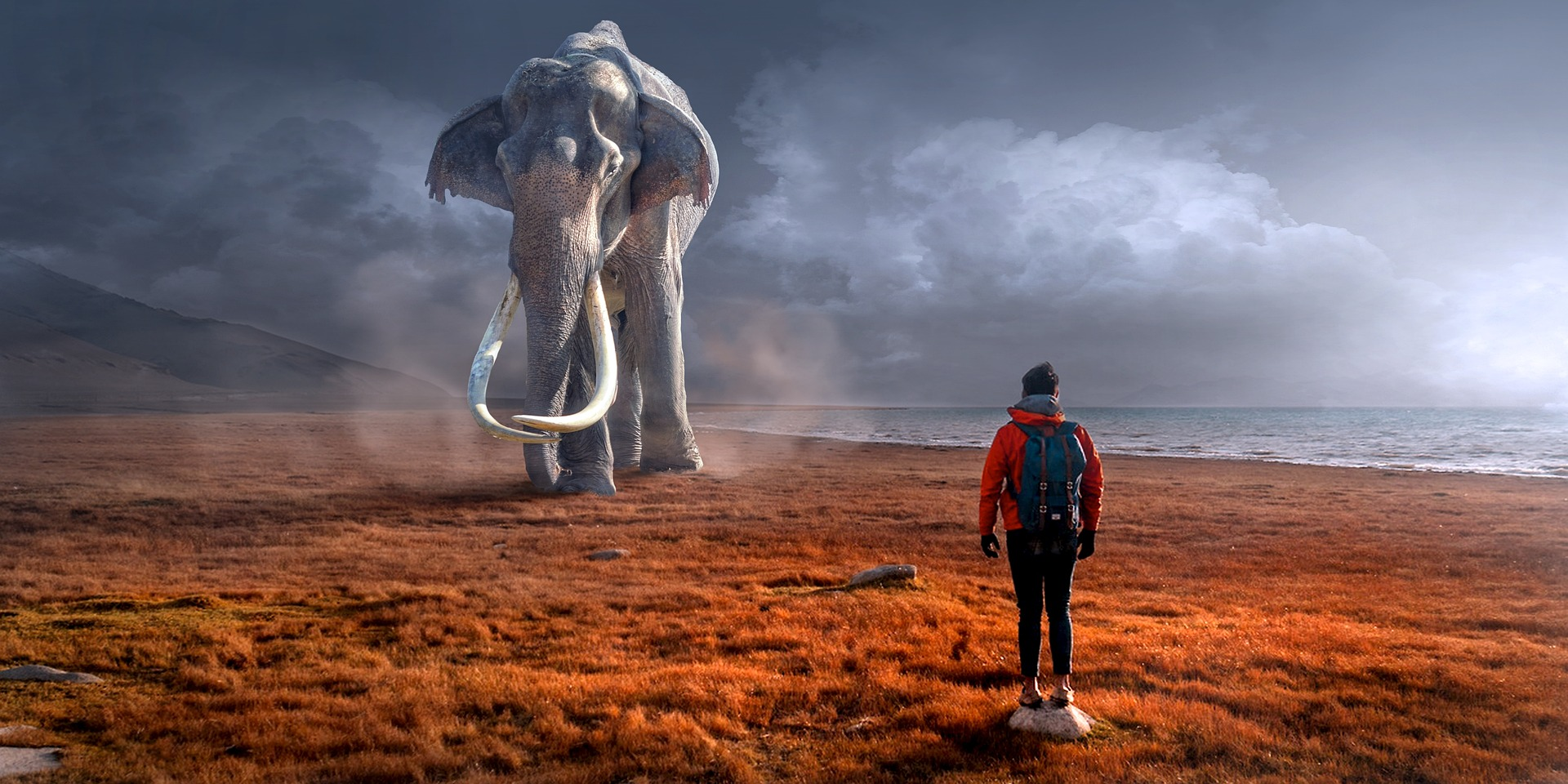 Why Teleology is the Elephant in Evolutionary Theory's Room