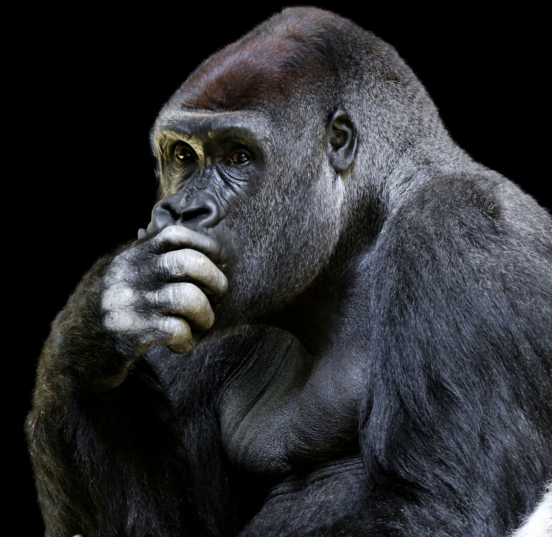 Is Evolutionary Psychology Impossible?